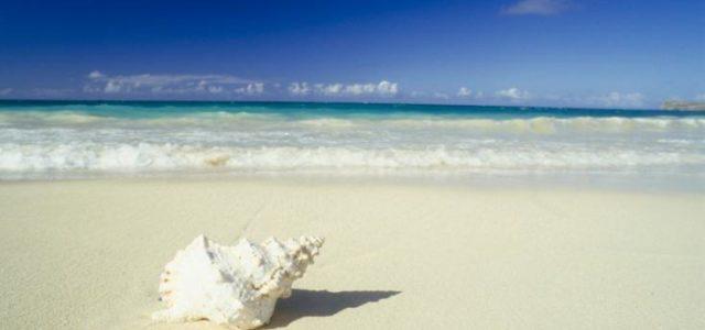 ¿Es verdad que se puede oír el mar en una caracola?